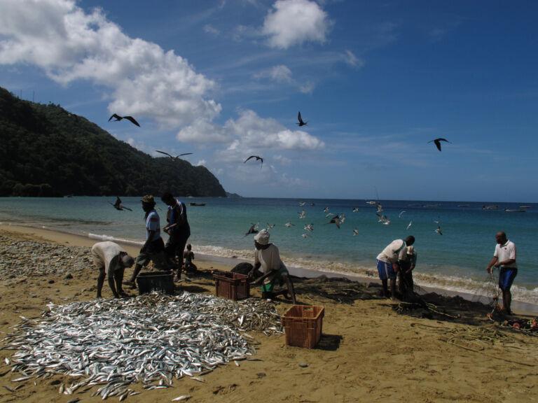 Caribbean - Fishermen in Tobago - 2013 by Fabien Barthelat