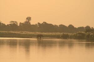 Elephant in the river at dusk in Kruger National Park, South Africa, CMentzel