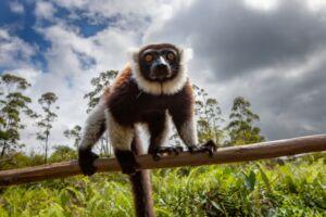 3 Andasibe Mantadia National Park, Madagascar - Gregoire Dubois