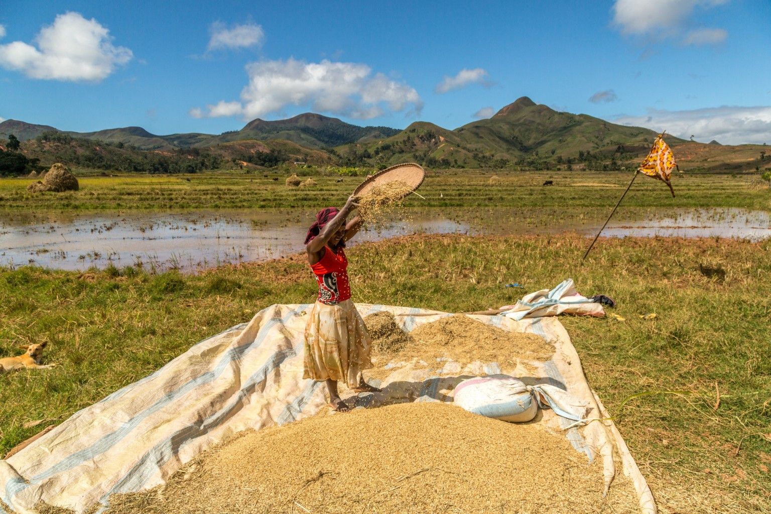 Protecting and restoring key habitats in Madagascar – contributing to global action to restore the Earth